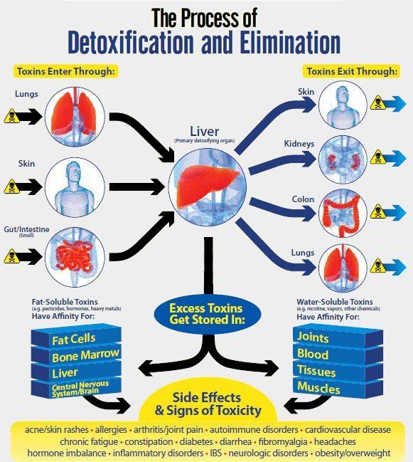 liver-detox-www.silalive.com